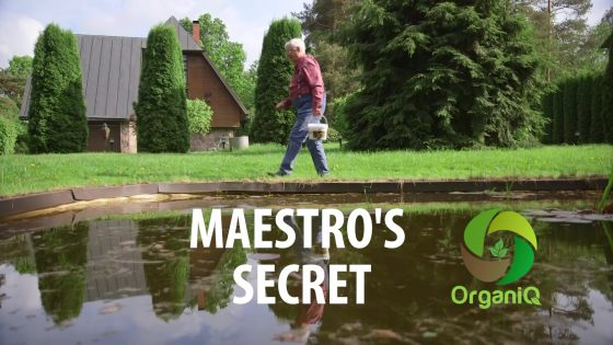 MAESTRO`S SECRET!
